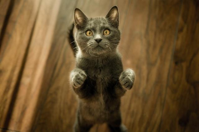 chaton joueur