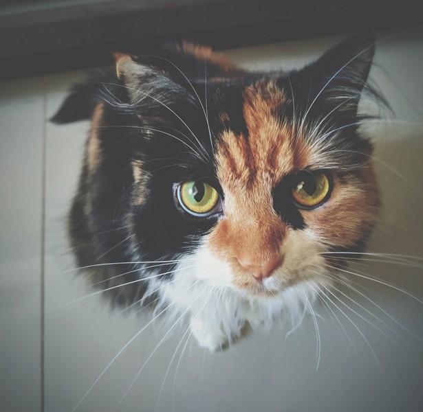 chat qui regarde avec insistance